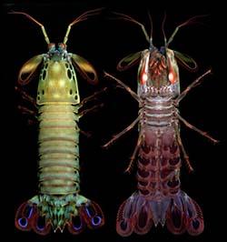 rovarok - ekdiszteroid forrás