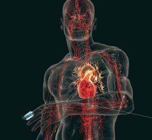 keringési rendszer - szívműködés