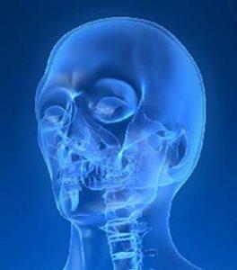 a fej anatómiája